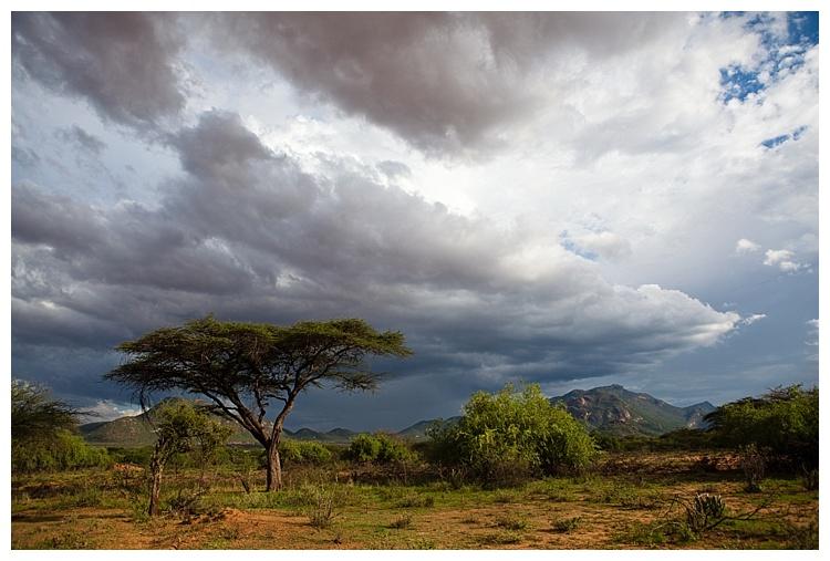 Samburu_Spekboom_SophieSmith.jpg