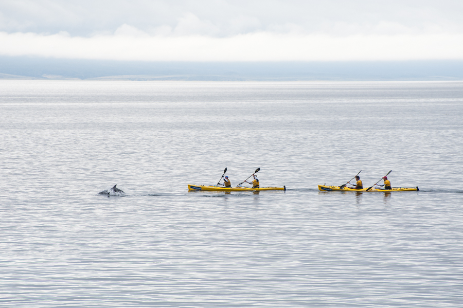 Team East Wind sea kayaking with a Peale's dolphin down an unusually calm Strait of Magellan in Southern Chile