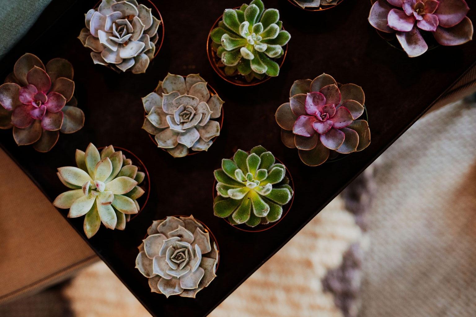 mahonialouisvillekentuckyplantshopfloraldesigncrystalludwickphoto(63of191).jpg