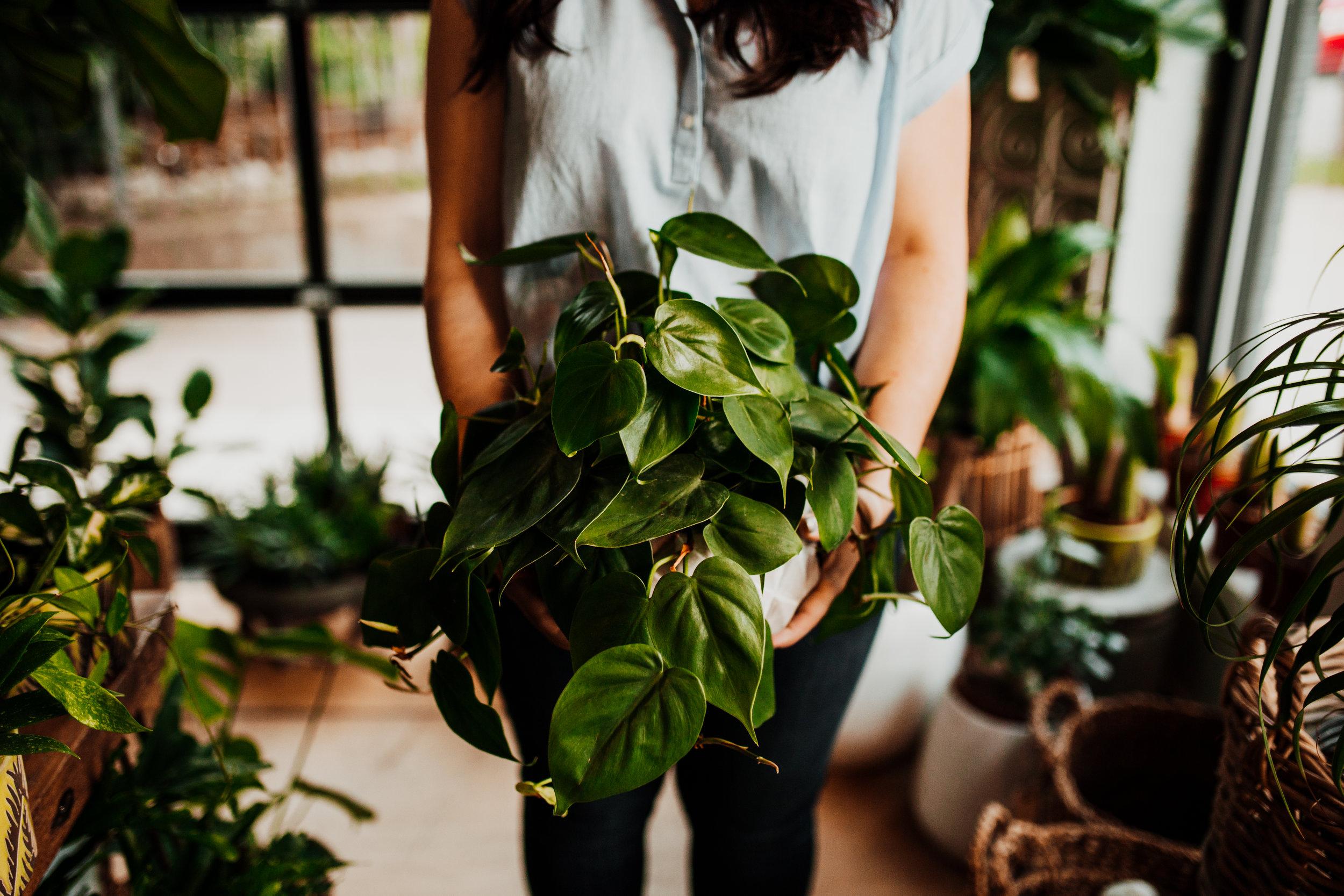 mahonialouisvillekentuckyplantshopfloraldesigncrystalludwickphoto(55of63).jpg