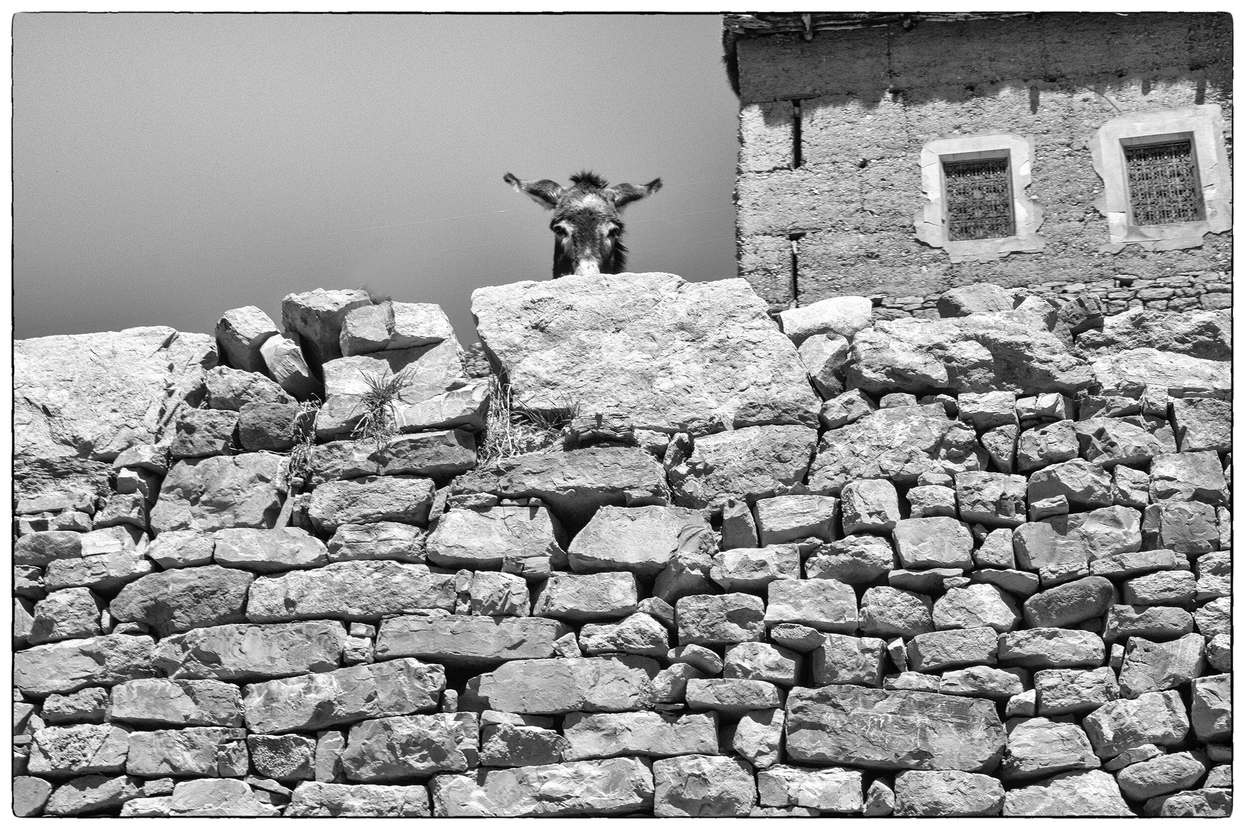 Donkey and stone wall (web).jpg