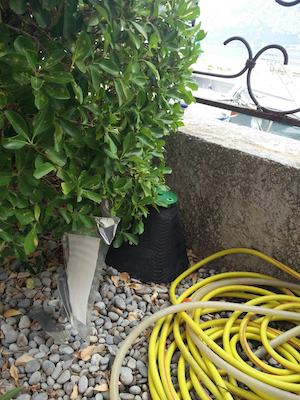 Red Palm Tree Weevil Trap in Prčanj - Montenegro