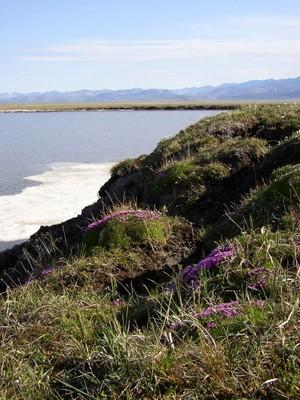 Arctic-Refuge-Wilderness-in-Demarcation-Bay.jpg