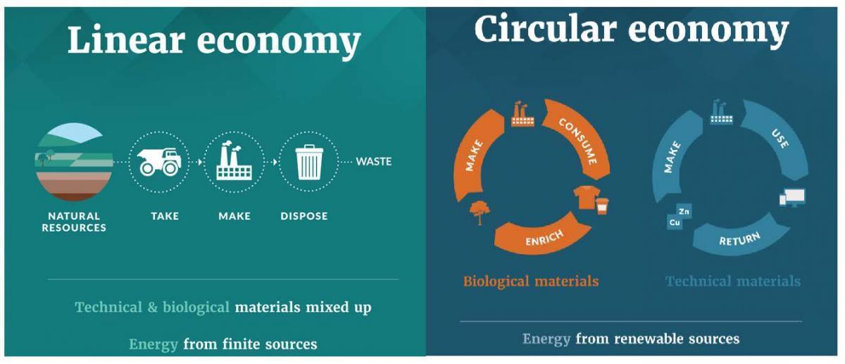 Linear and Circular Economy
