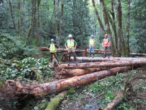 Large Wood Placement - SWCD and NRCS