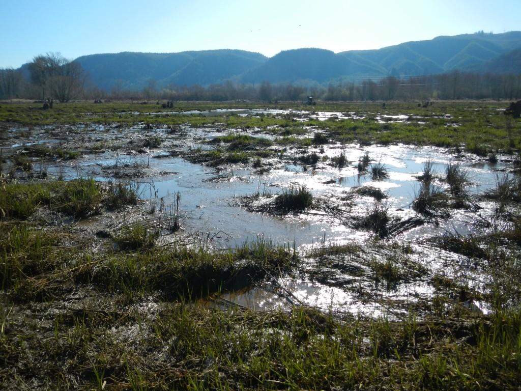 Marsh Restoration