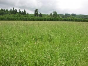 Pasture Improvement