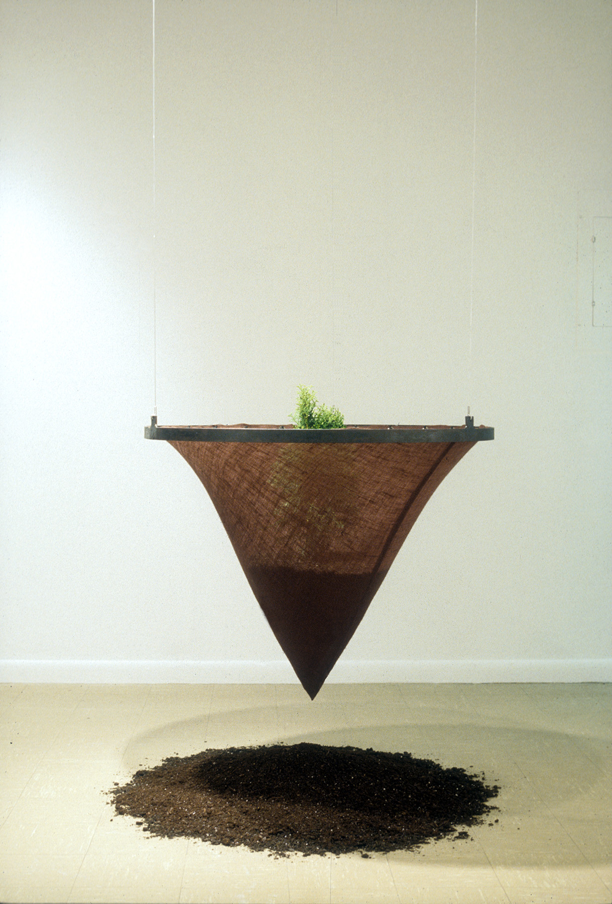 Separation  / 2004 / Steel, burlap, soil, evergreen tree / 4' x 3' x 3'