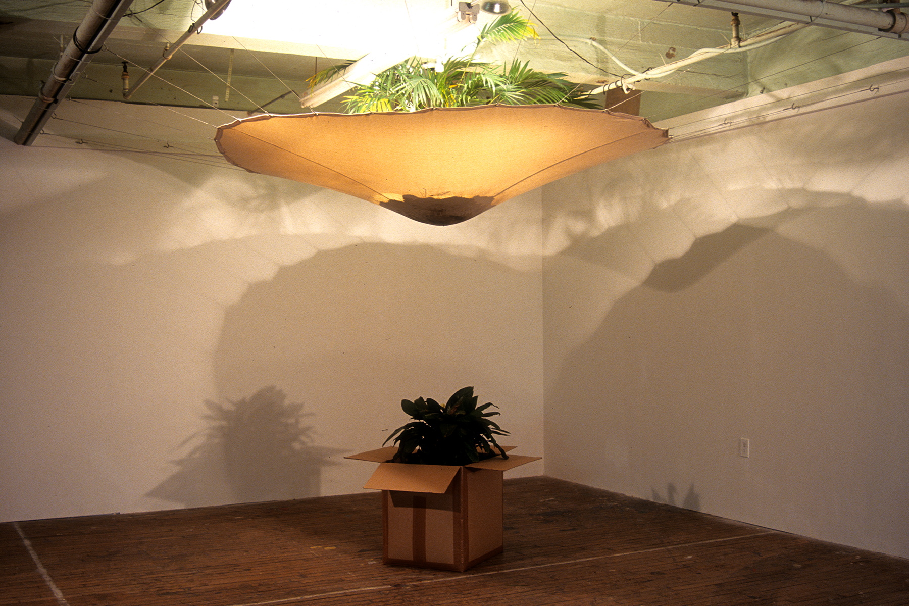 Dregs  / 2006 / Canvas, cardboard, hose, water, soil, houseplants / 12' x 14' x 16' (dimensions of room)