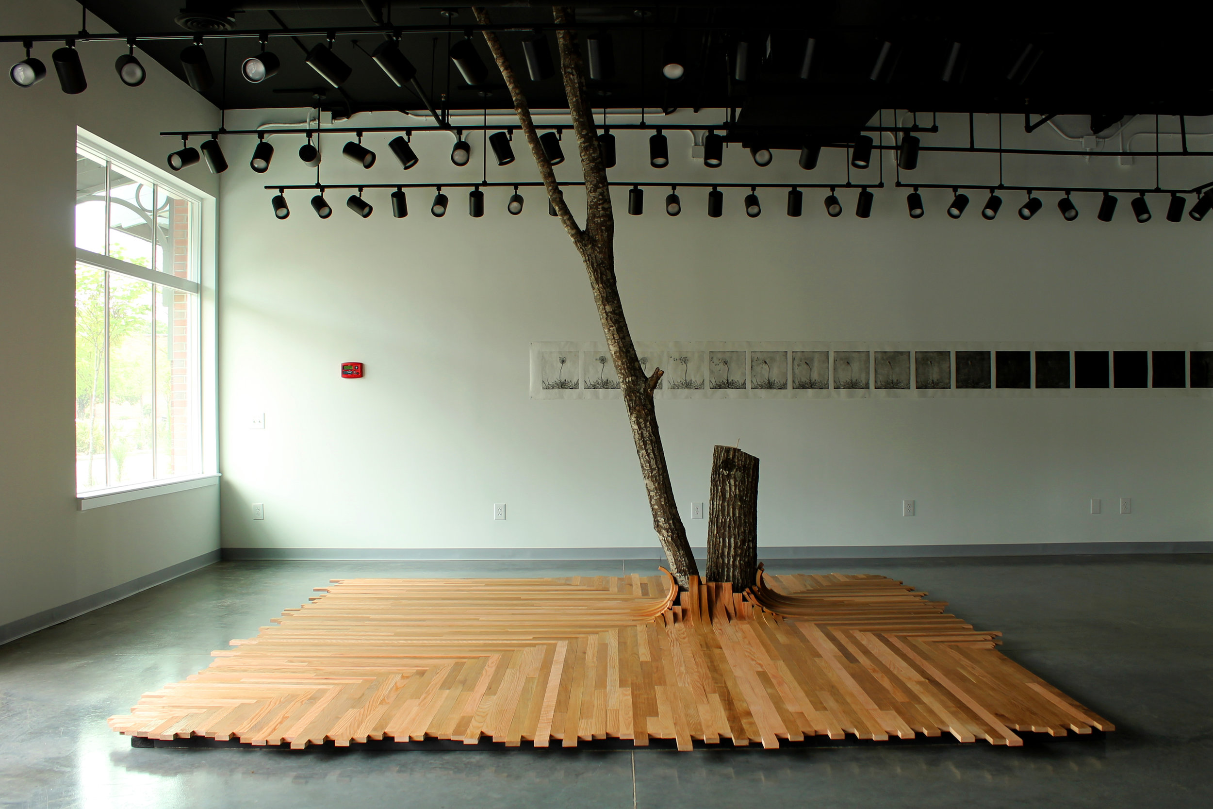 Seep II  / 2015 / White oak, red oak, grass, soil / 12' x 12' x 12'