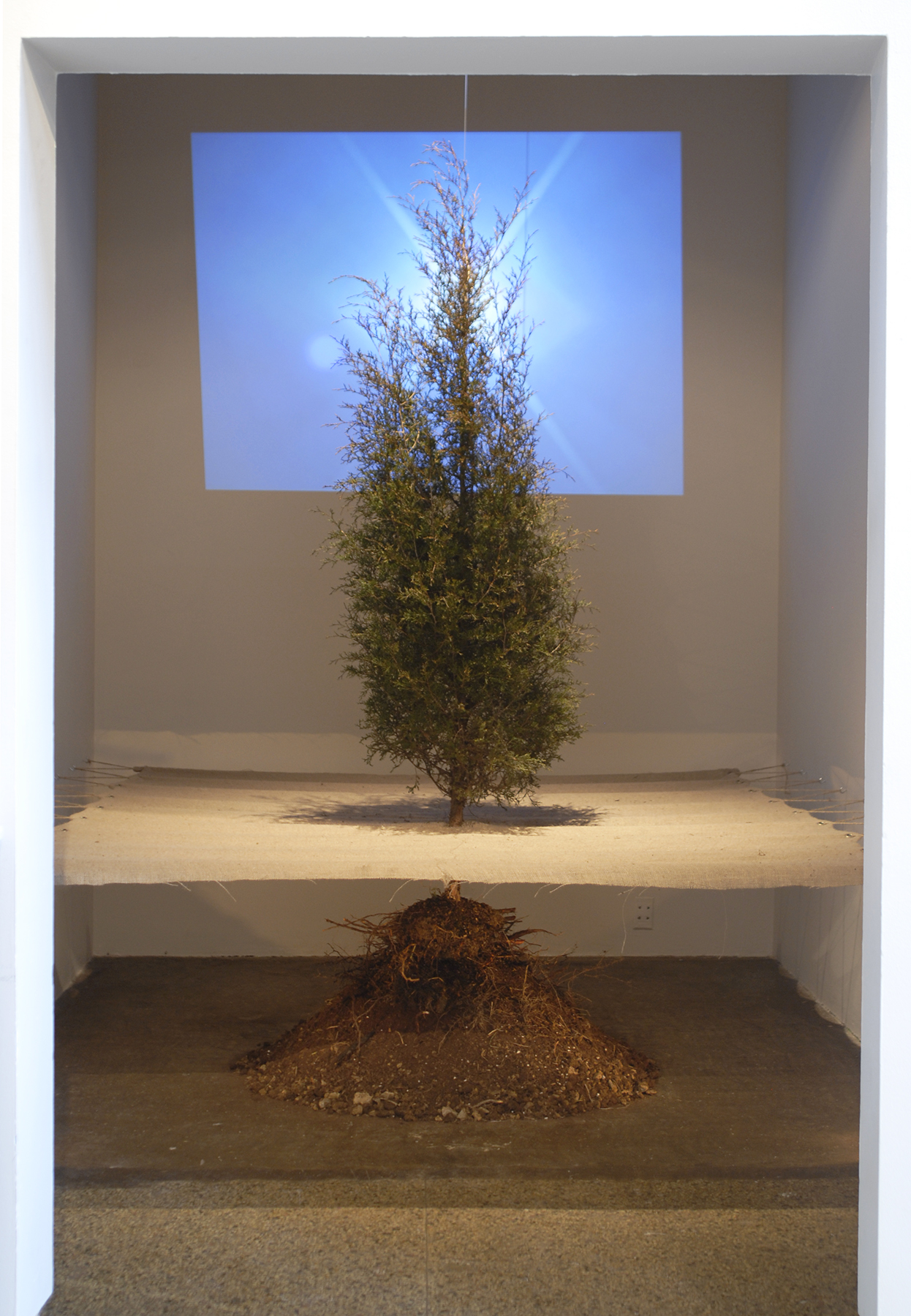 Time and Disregard  / 2010 / Burlap, evergreen tree, soil, video/audio projection / 14' x 8' x 12' (dimensions of room)