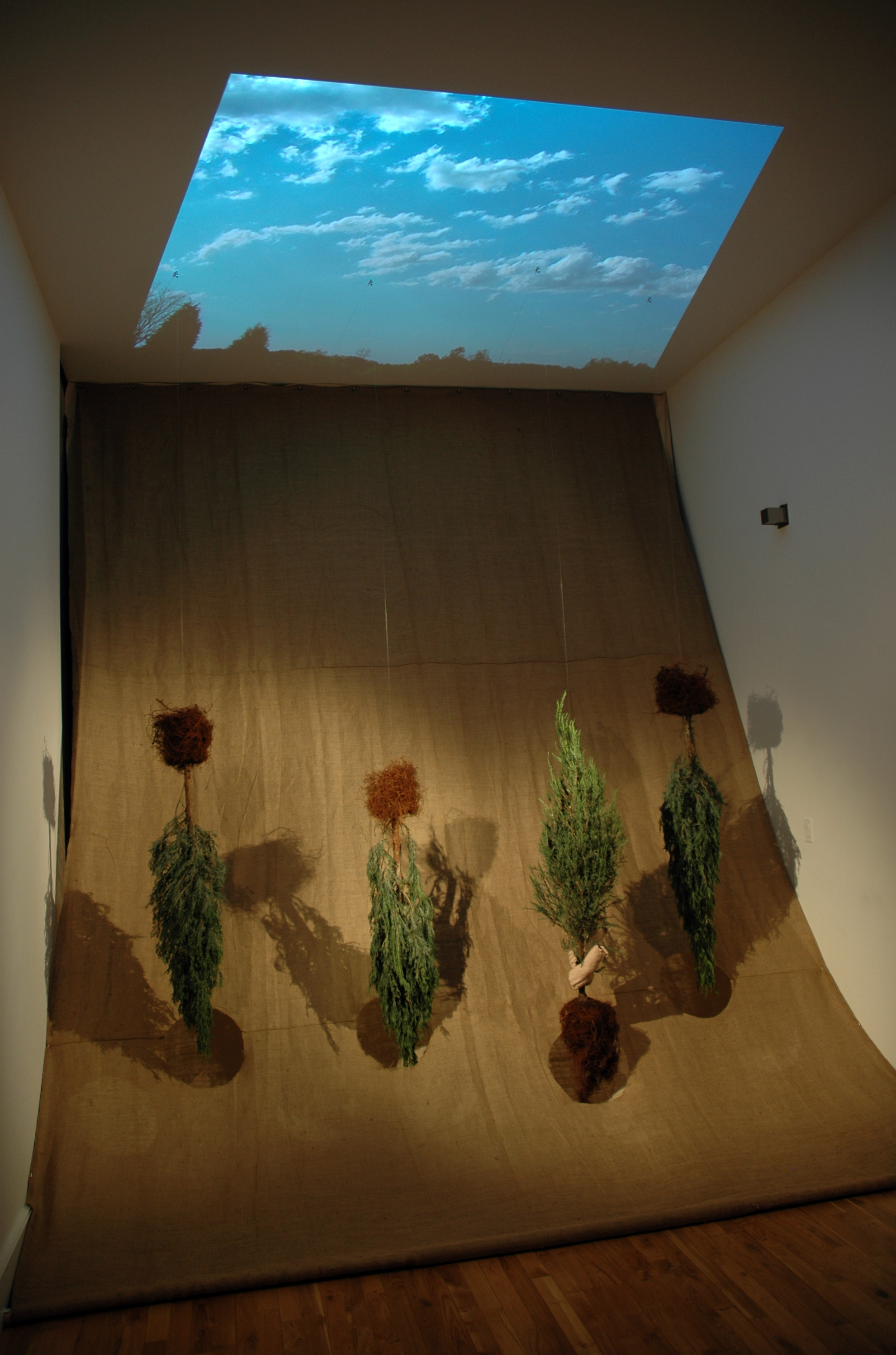 Uproot/Re-root  / 2009 / Burlap, juniper trees, cast paper, video projection / 13' x 12' x 8'