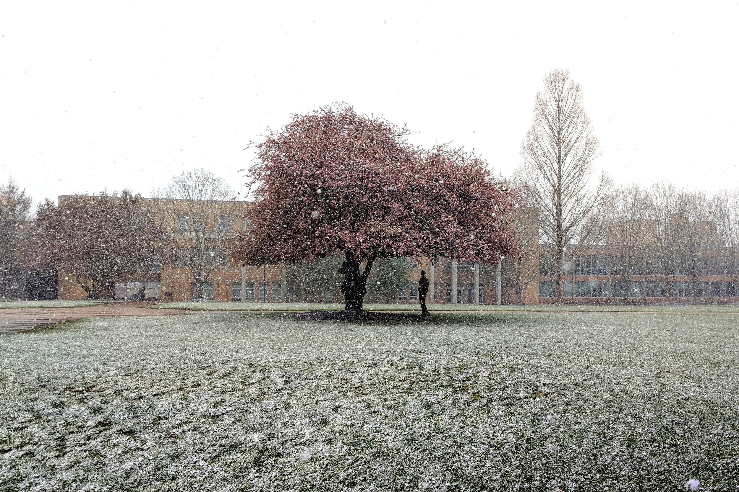 misc.tree15.jpg