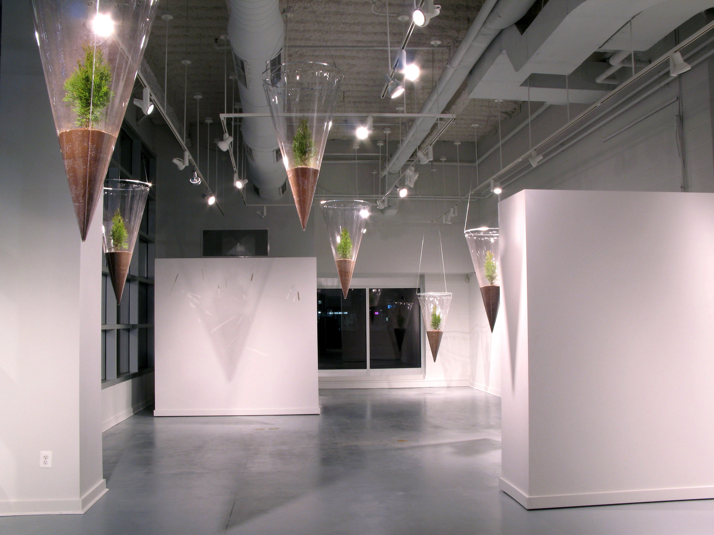 Descent  / 2012 / Clear vinyl, aluminum, grommets, monofilament, soil, cypress trees / 16' x 22' x 51'