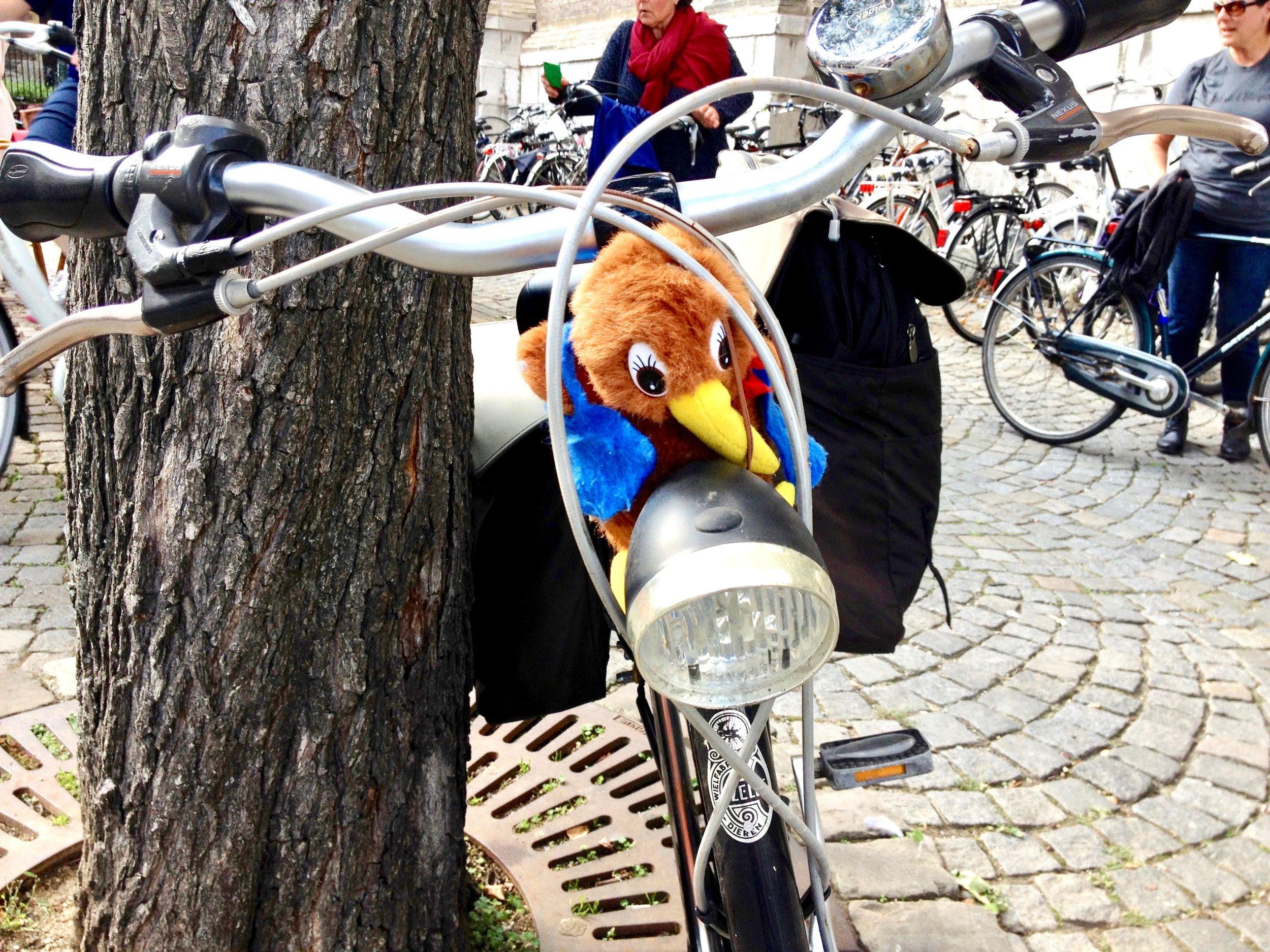 Kiwi-bicycle-dutch-netherlands.jpg