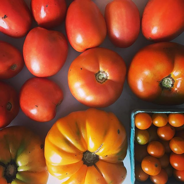 You know summer's almost over when you get 3 bags of tomatoes in your CSA box.