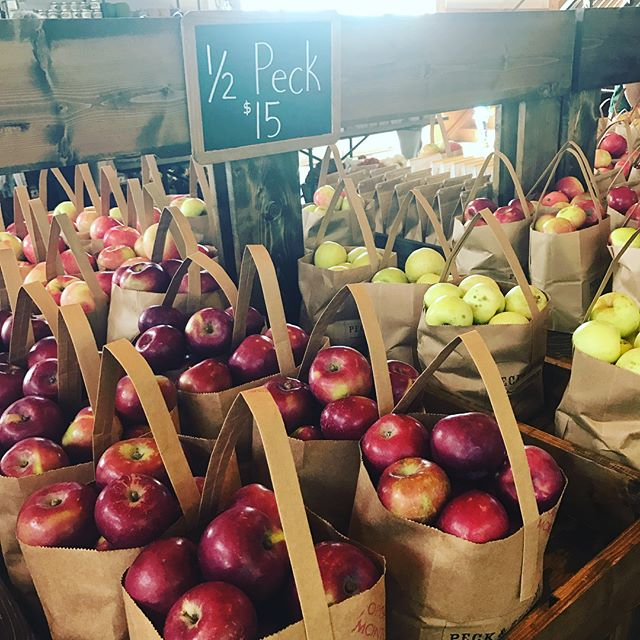 Apple picking! @peckandbushel never disappoints. 🍎