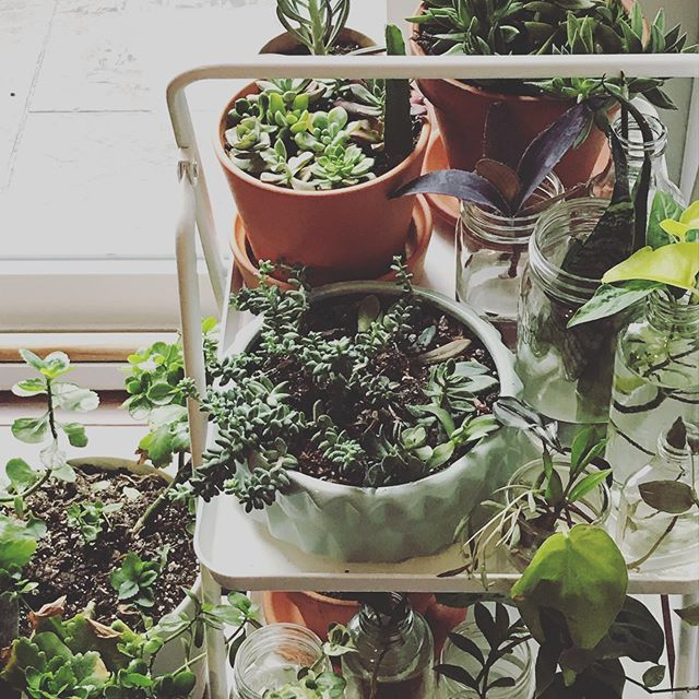 I think I need another plant stand.