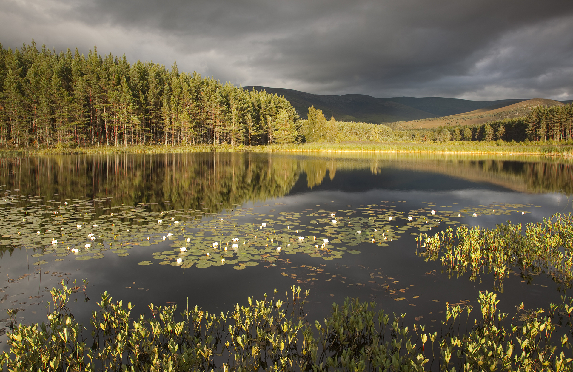 Rewilding offers Scotland a brighter future. - Scotland could be a world leader in transforming its environment so that it works in all its colourful complexity, cleaning air and water, storing carbon, reducing flooding and attracting people to live, work and visit.
