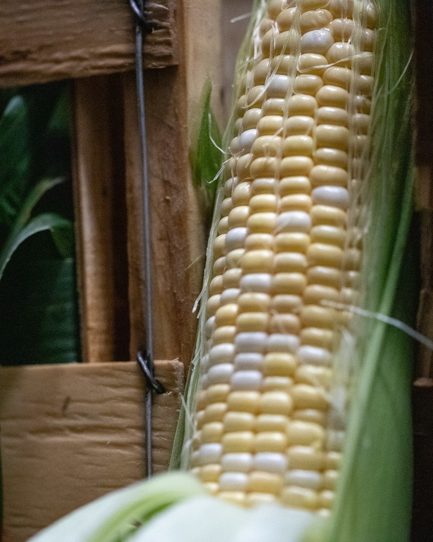 corn - Locally Grown
