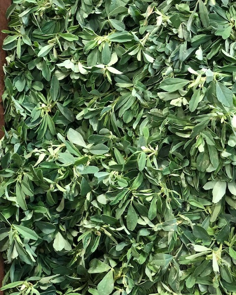 methi leaf - Locally Grown