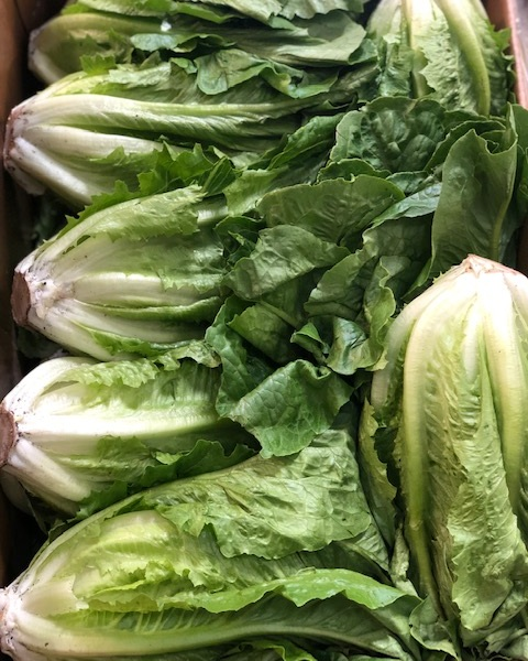 romaine - Locally Grown