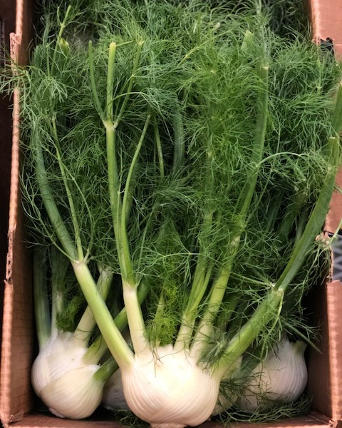 fennel - Locally Grown