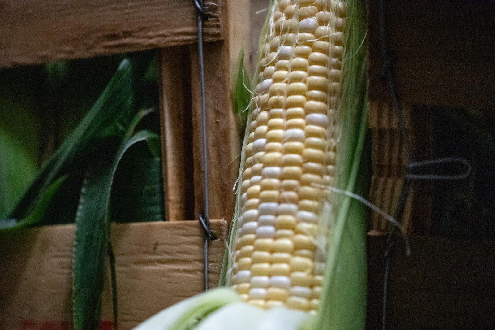 Corn -