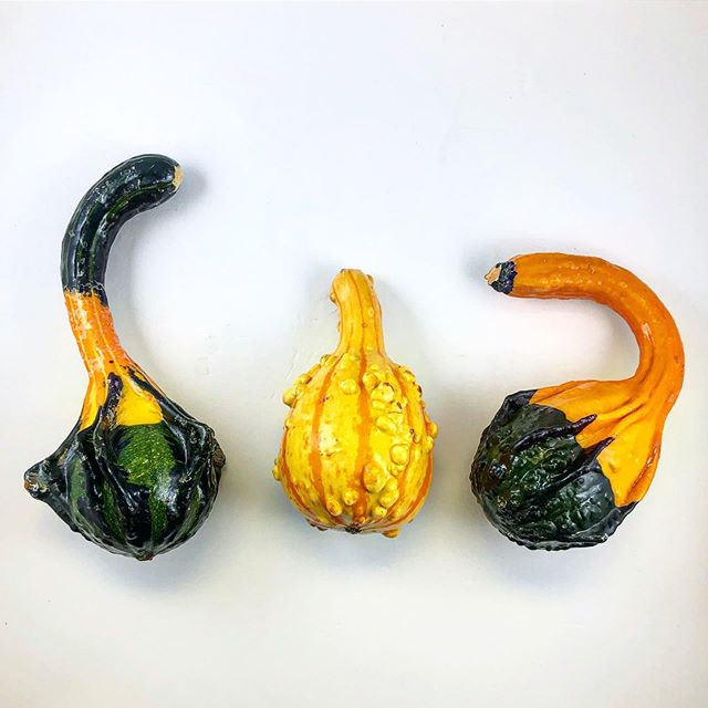 Ohhh my gourd! These little guys are the perfect fit for a fall center piece on any table in your home. Pumpkin today and grab these fun decorations before you're hanging the Christmas lights... 😳~ • • • • #gourds #pumpkins #fall #pumpkinspicelatte #philadelphia #philly #decor