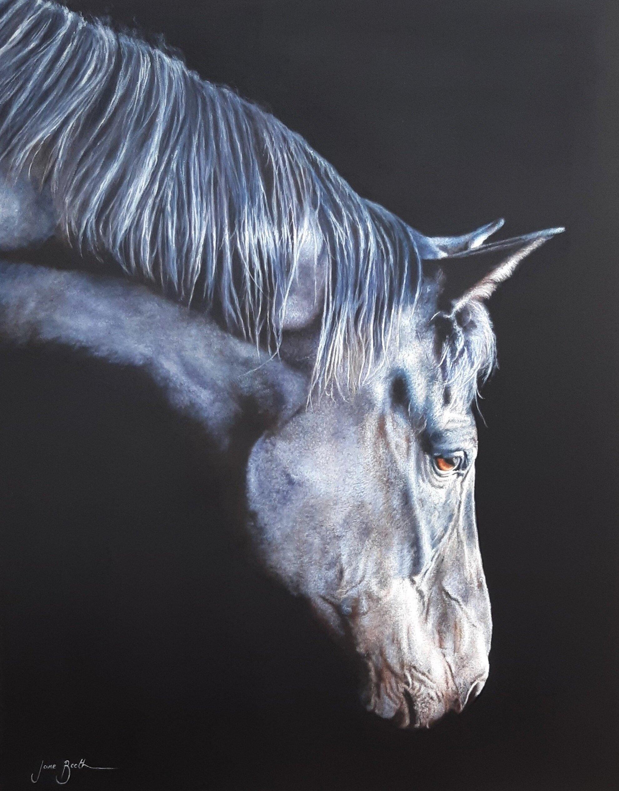Black Horse Jane Booth Fine Art