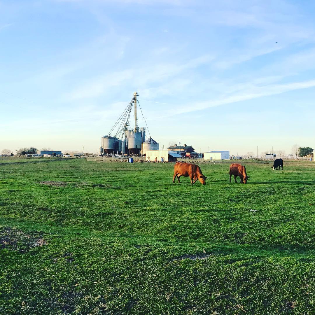 cow+chickens+feedmill.jpg