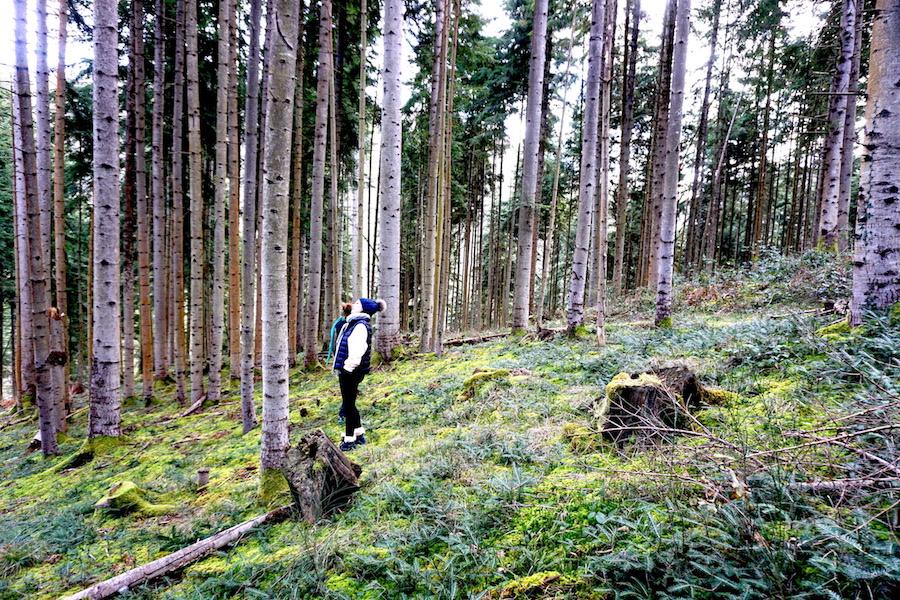 forest walk1.jpg