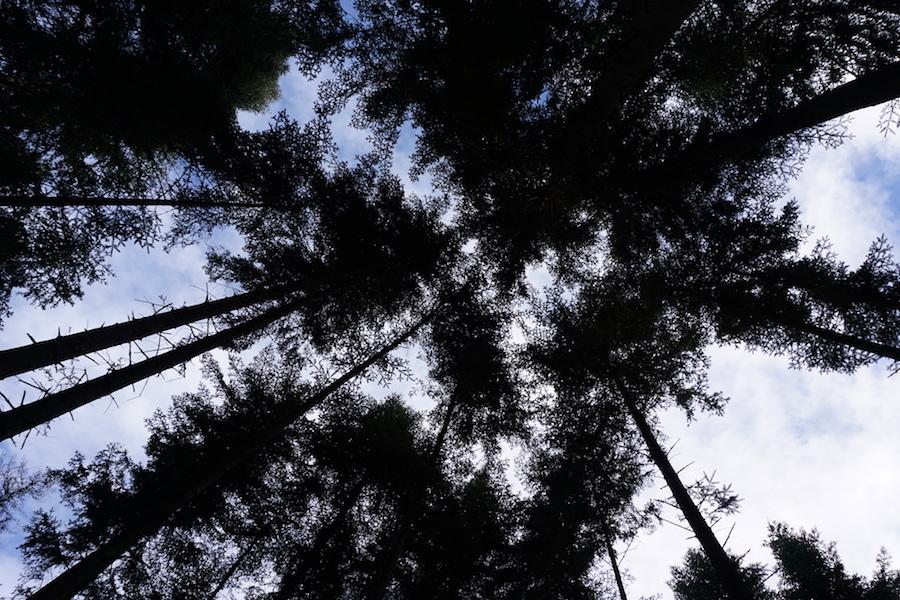 tree sky.jpg