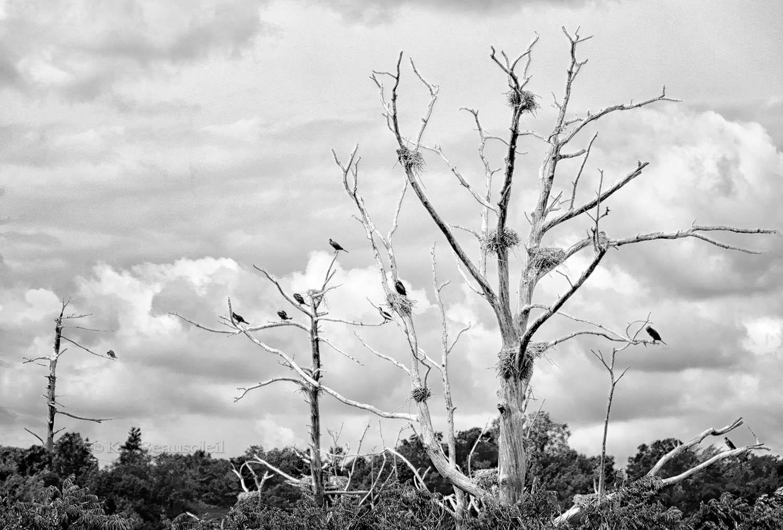 Lives of Trees:  VACANCIES