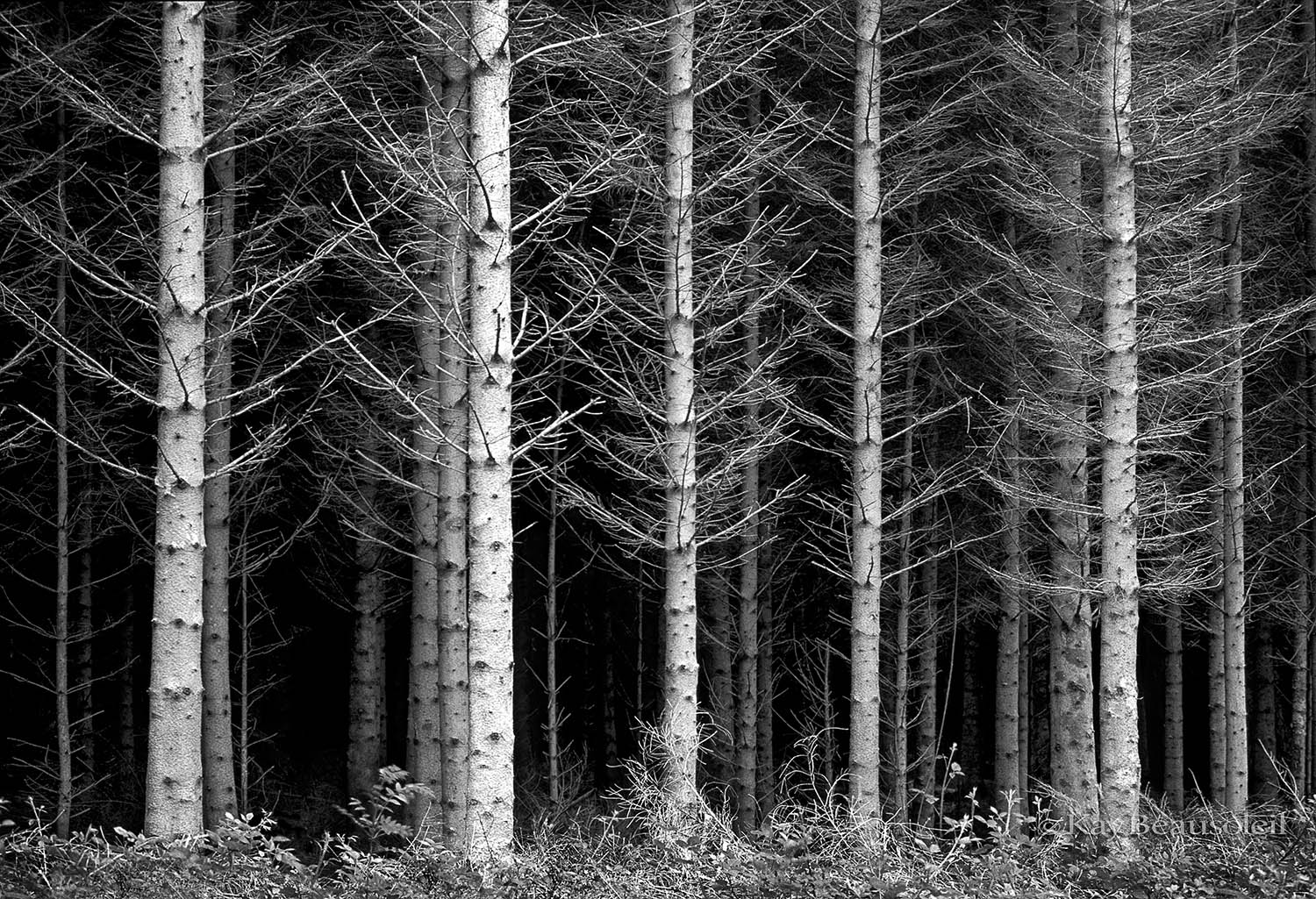 Lives of Trees:  ARRANGED