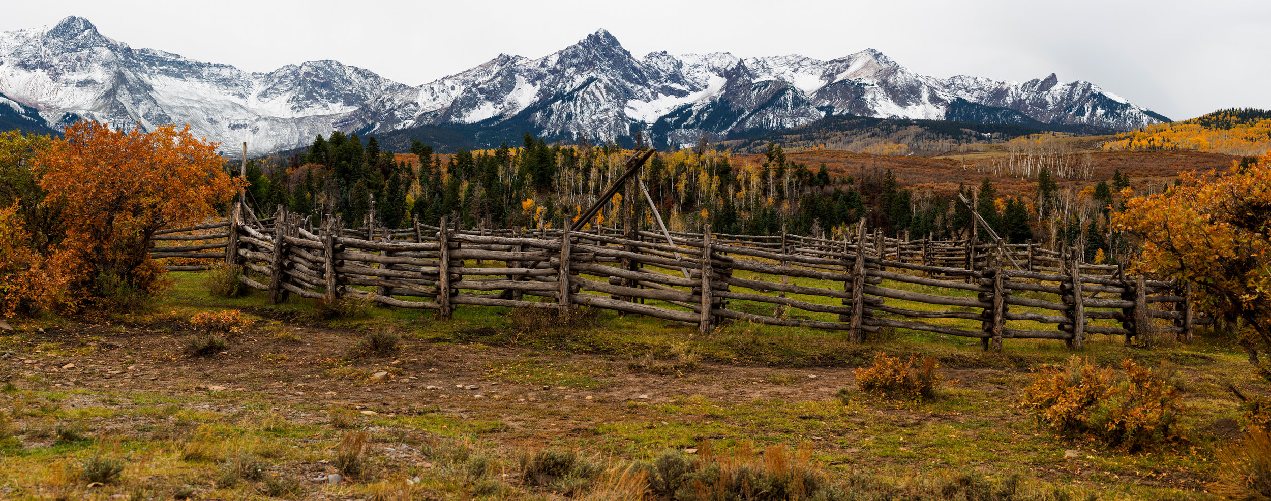 Rustic fence and aspen grove are plenty on the country roads all around Ridgway.