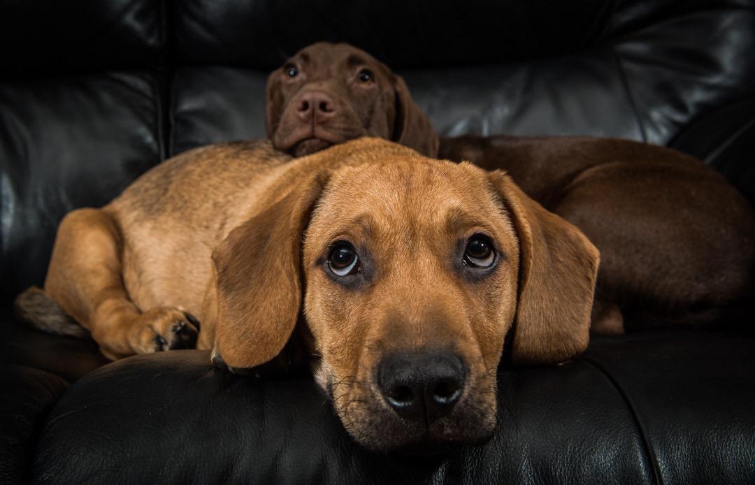 pets (1 of 1)-6.jpg