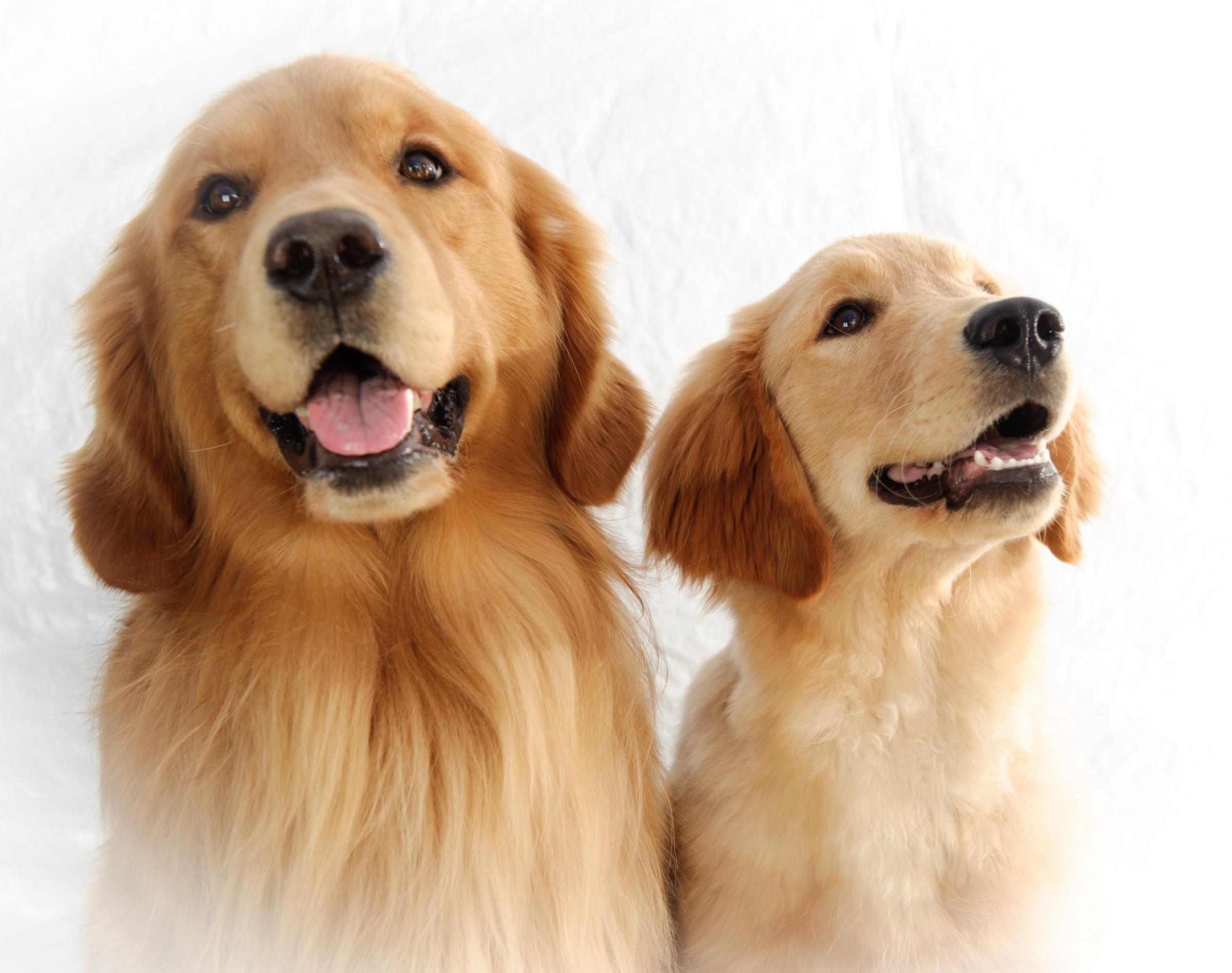 1112_Pet Shoot Tracy185185.jpg