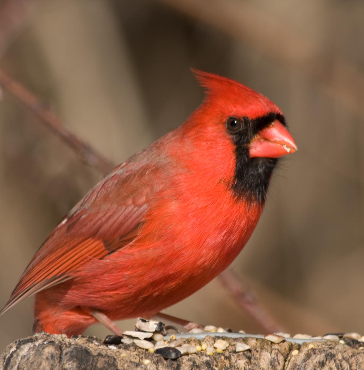 Nature Birds -