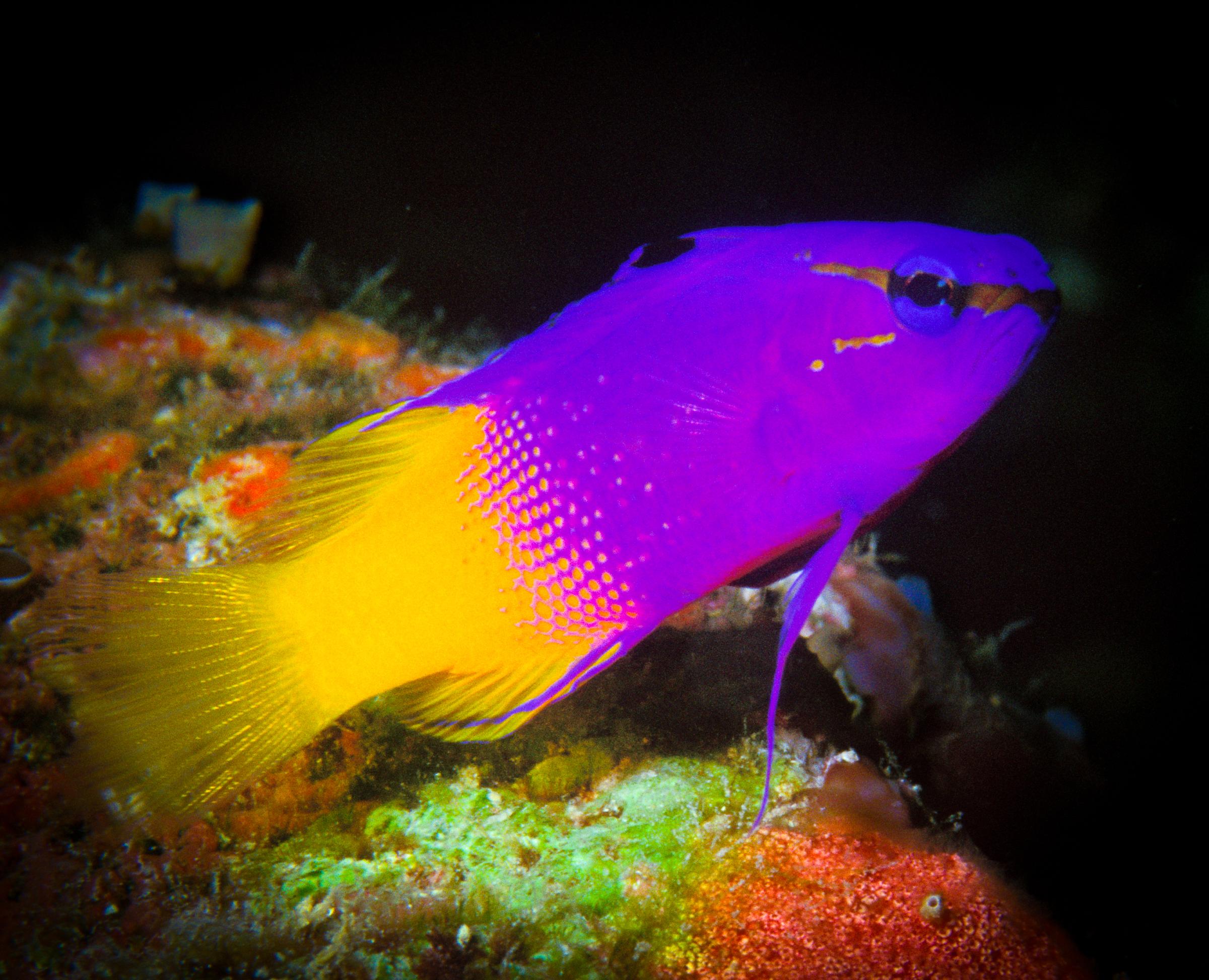 Underwater -