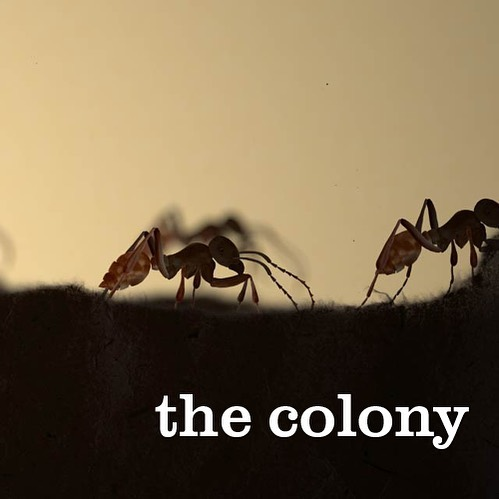The Colony is coming 🐜 Check our our brand new project website - link in bio! #thecolonyshow