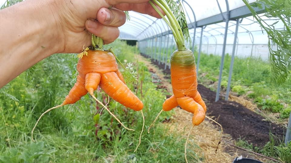 carottes qui cours ;)