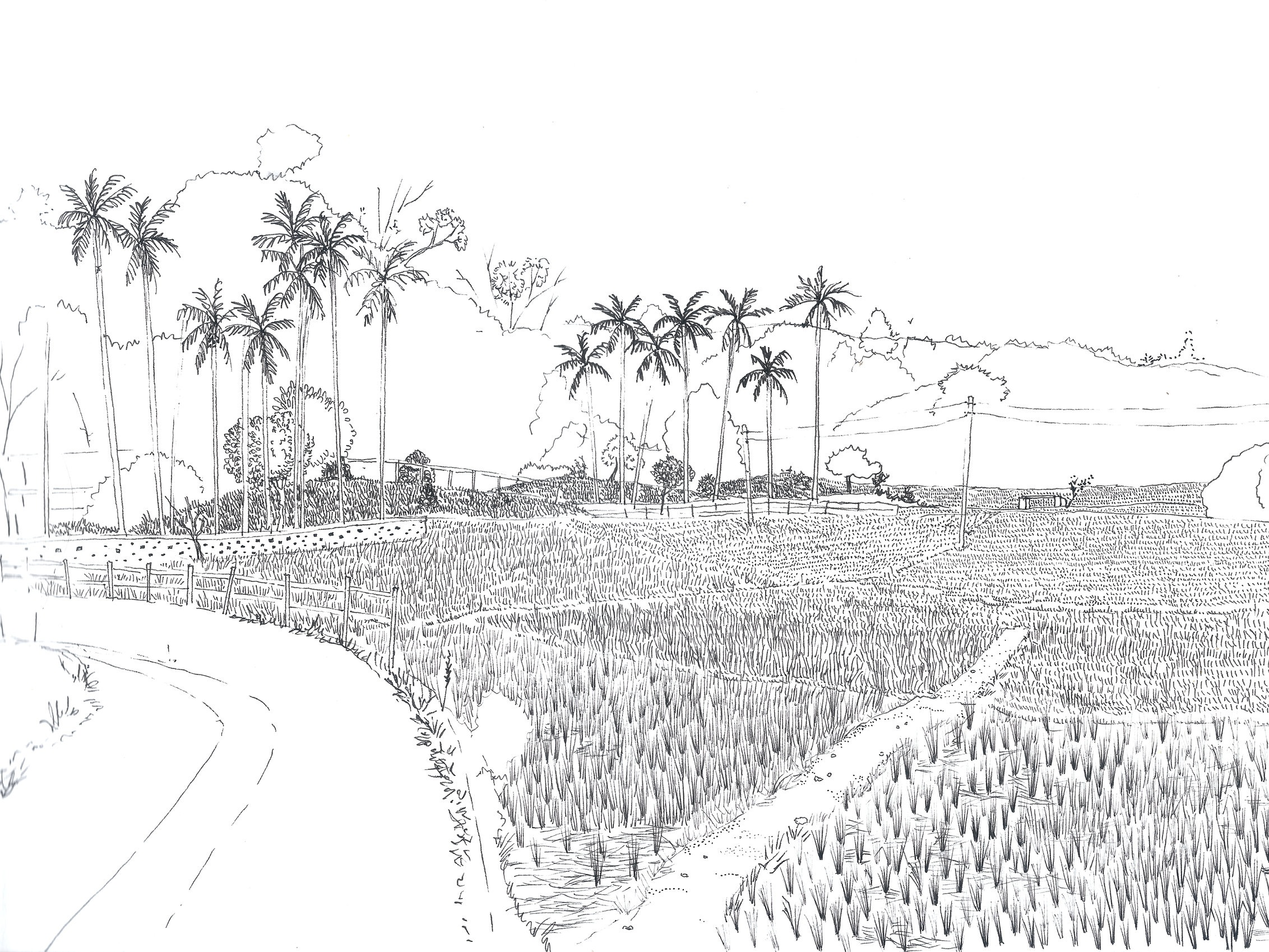 Paddy fields, Gamchakobra village, Tripura.