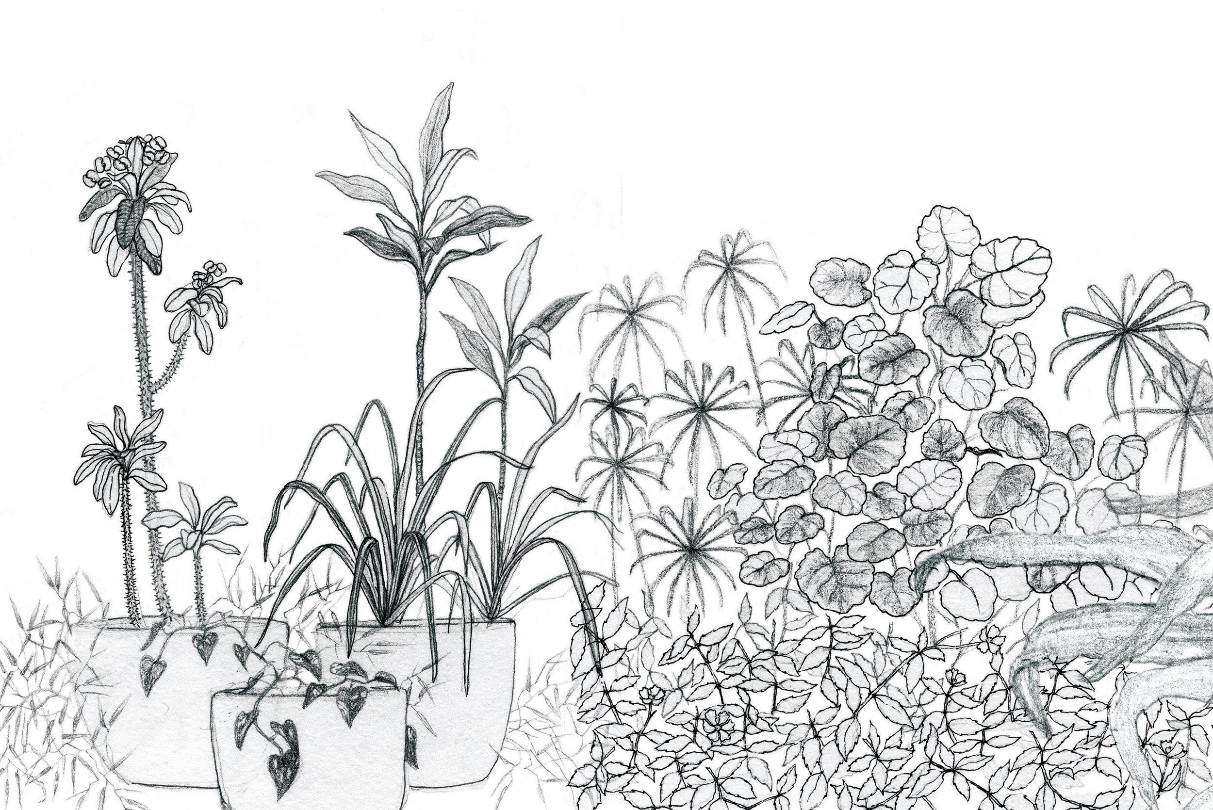 Wildgarden wallpaper_Flat_for WEBSITE12_RGB.jpg