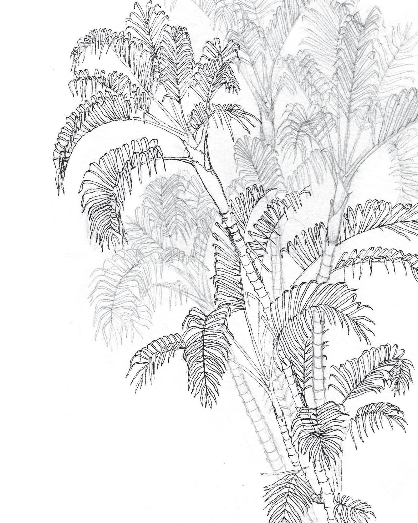 Wildgarden+wallpaper_Flat_for+WEBSITE8_RGB.jpg