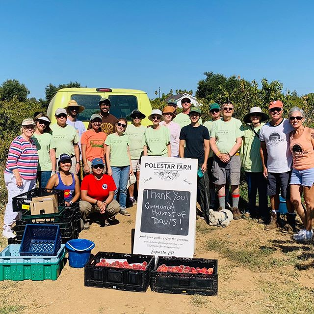 Thank you Community Harvest of Davis. for coming out and gleaning our peach trees! What a great group! So wonderful to have you here. Thank you for taking great care of our trees.  Grateful knowing our peaches are going to those in need🍑🧡🍑. See you next year! @harvestdavis #communityharvestofdavis #gleaning #foodinsecurity #community #organic#farmlife #yolofoodbank
