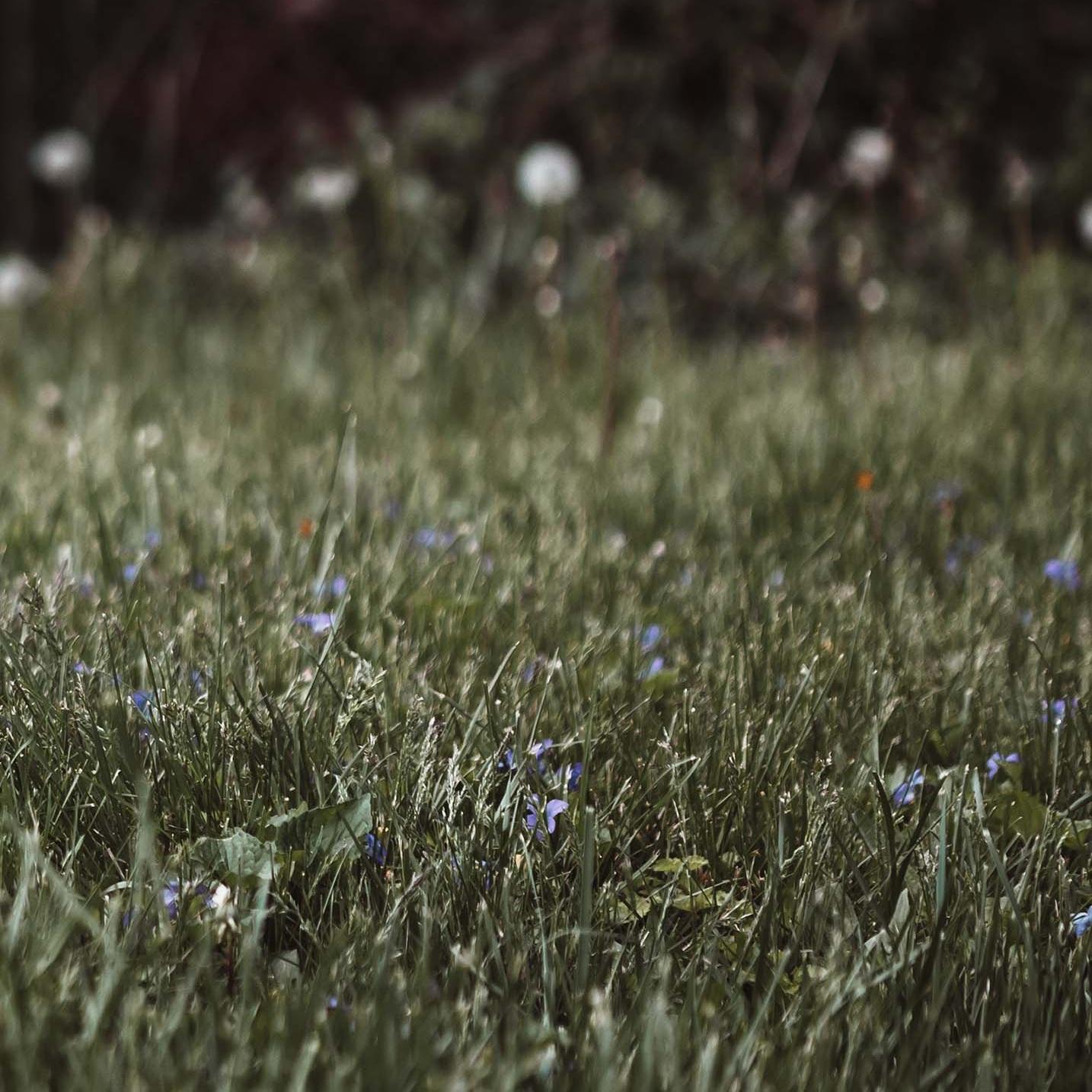 El Césped no es siempre más verde - Si tu eres un jardinero, paisajista, granjero o trabajador agrícola, has usado Roundup® y padeces de enfermedad, usted podría entablar un proceso en contra de Monsanto y obtener una compensación.