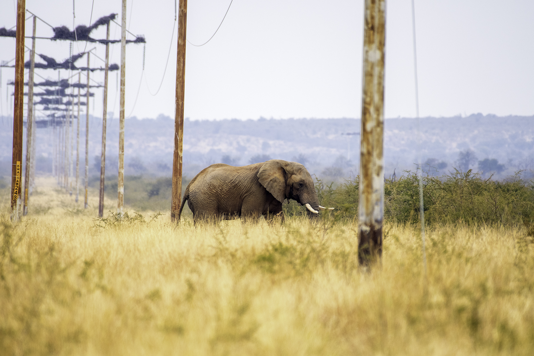 As the human population continues to grow at an alarming and unsustainable rate, we continue to encroach more and more on the few wildlife areas left. These are areas which animals like elephants desparatly depend on. This puts both elephants and humans in danger and does nothing to abate the human wildlife conflict.