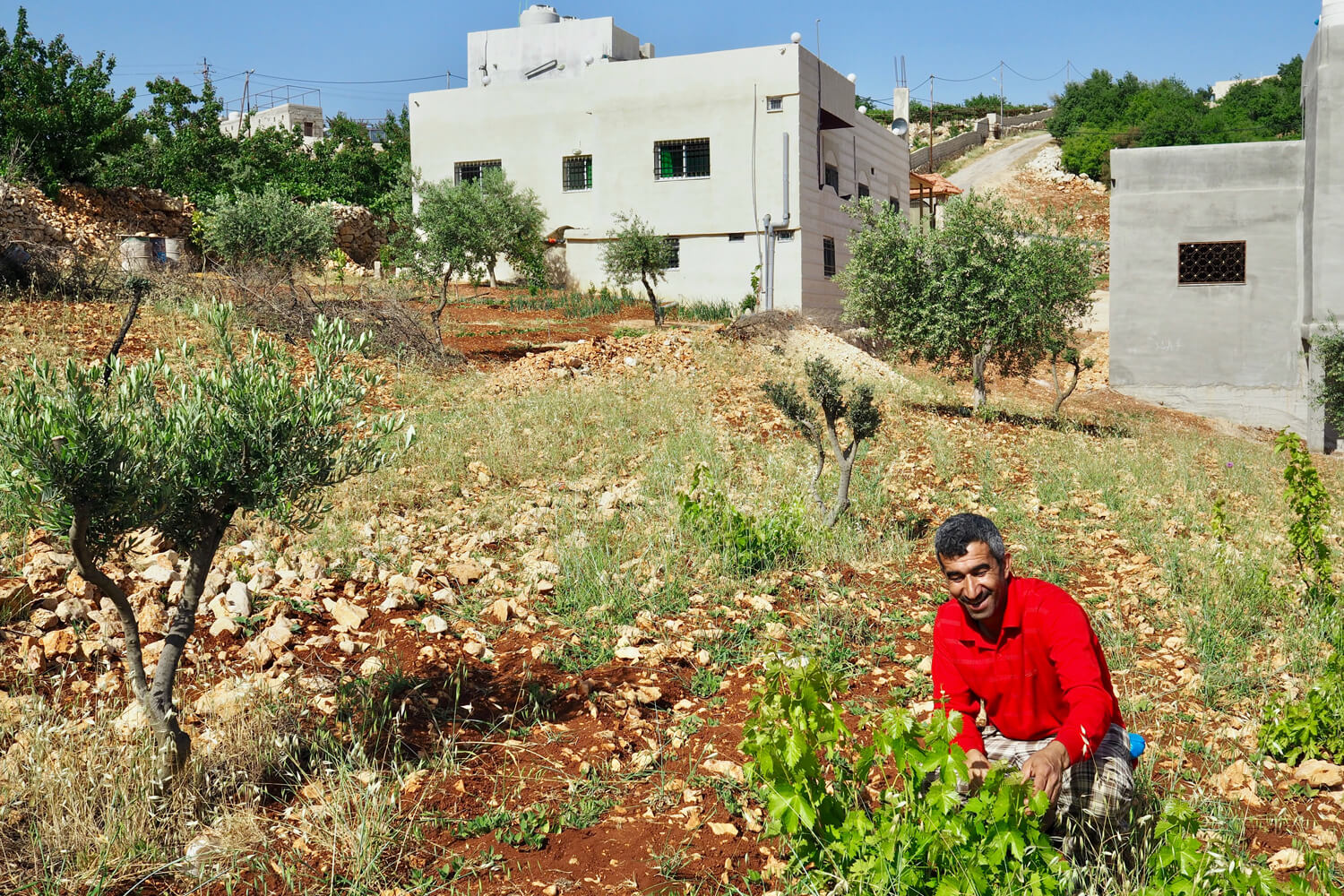 Mohammad collects grape leaves from the garden to be used in our evening meal © Sarah Reid