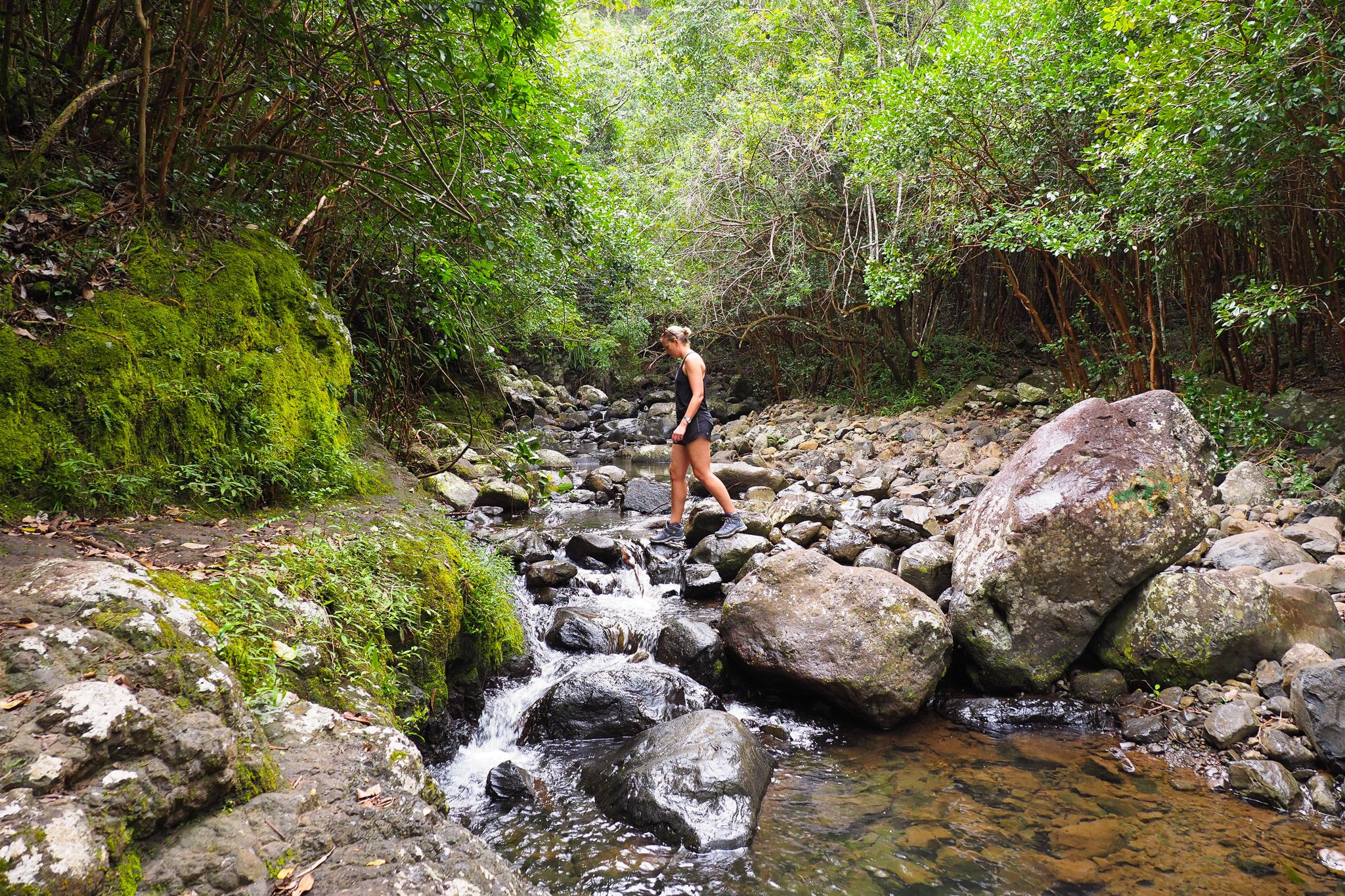 It's easy to escape the crowds in Black River Gorges National Park © Sarah Reid